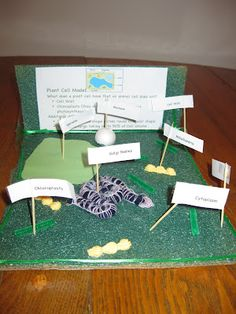 Parts of a Plant Cell 3d Plant Cell, Plant Cell Project, Plant Cell Model, Plant And Animal Cells, Biology Projects, Social Studies Projects, Science Projects, School Projects, School Ideas