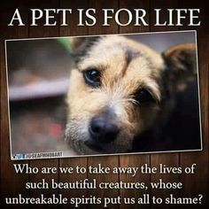 """People who own dogs , they are not """"property """" they are living beings that have feelings. If you can't afford to look after a dog don't get one b/c you kid should have a dog. Take responsibility as an adult and look after your pets. Don't become a sociopathic dog owner !"""