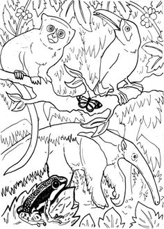 Rainforest Animals Coloring Pages. 20 Rainforest Animals Coloring Pages. 35 Most Fine Rainforest Animals Colouring Pages Forest Coloring Pages, Dog Coloring Page, Cute Coloring Pages, Christmas Coloring Pages, Animal Coloring Pages, Printable Coloring Pages, Adult Coloring Pages, Coloring Pages For Kids, Free Coloring