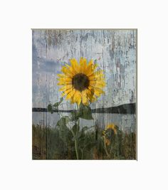 Sunflower Wall Art rustic, sailboat, ocean/coastal theme wall art, brown blue decor
