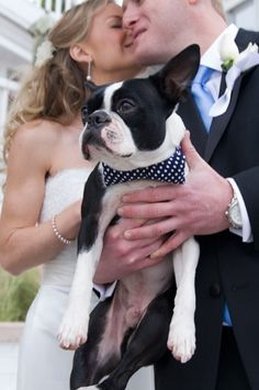 A Boston Terrier joins the fun on a couple's wedding day. Photo credit: heatherfowlerphotography.blogspot.com.au www.bestweddingshowcase.com