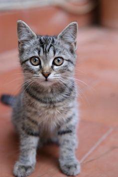 JUST BEAUTIFUL KITTEN <<3<3<3<3<3<3