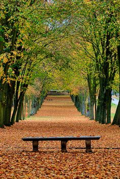 Autumn in the park of Chamarande, France