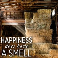 ~Happiness does have a smell~ The Velvet Muzzle #horses #lovehorses #horseinspiration www.thevelvetmuzzle.com
