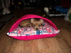 Teek in a DIY dog bed!