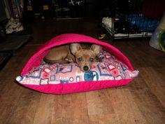 Teek in a DIY dog bed!