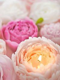 コロンとまぁるい形と何層にも重ねた花びら。 優雅で優しい印象のピオニー(シャクヤク)のキャンドル。 100%蜜蝋のしっとりとした上質感と優雅な姿は...