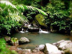 el-yunque-rainforest-puerto-rico