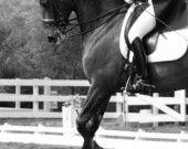 11x14 fine art horse metallic photograph. $48.00, via Etsy.