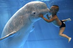 beluga whales and small children