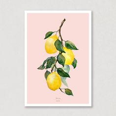 """""""When life gives you lemons..."""" Don't you just love the colours on this one? This watercolour poster with lemons on a branch, will really lighten up your livingroom! This poster come in 6 different backgroundcolours. Check out which one is your favorit! 😍🍋 #lemons #lemonbranch #poster #watercolor #watercolours #art #aqva #aqva_watercolours Watercolor Artwork, Watercolor Paper, All Poster, Posters, Muted Colors, Watercolours, Colorful Backgrounds, Check, Prints"""