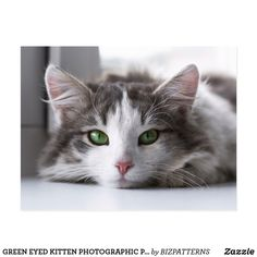 GREEN EYED KITTEN PHOTOGRAPHIC POSTCARD Personalized Note Cards, Cat Quotes, Quote Posters, Custom Posters, Postcard Size, Custom Framing, Cats And Kittens, Art Pieces, Artwork