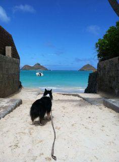 【Mama's Hawaii】  久々に気持ちの良いお天気  子供達を学校に送った後は、さっさと家事を済ませ愛犬とドライブ‼︎ 我が家から車で30分、のんびり運転して、買い物ついでにラニカイビーチ。 今週で学校はおしまい、冬休みは娘達がいると賑やかになるので、今のうちに癒されておこう〜 Mama  S