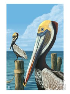 Key West, Florida - Brown Pelican - Lantern Press Artwork (Art Print Available) Florida Keys, Key West Florida, Tampa Florida, Florida Fair, Islamorada Florida, Florida Travel, Pelican Art, Pelican Drawing, Pismo Beach