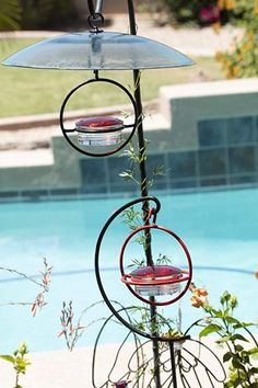 """Love this """"Love Hummingbirds? We do too :) You'll love this Best Small Glass Hummingbird Feeder with Red Perch. It Attracts Hummers Like Crazy and its the perfect gift idea for moms, grandmas, women, hummingbird lovers or even yourself :) #hummingbird #hummingbirds #hummingbirdfeeder #hummingbirdgifts #WeLoveHummingbirds Squirrel Proof Bird Feeders, Wild Bird Feeders, Humming Bird Feeders, Glass Hummingbird Feeders, Cherry Valley, Little Birdie, Wasp, Hummer, Lawn And Garden"""