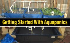 Aquaponics kit indoor aquaponics kit,apartment aquaponics aquaponics for dummies,backyard aquaponics system design best fish for aquaponics. Commercial Aquaponics, Aquaponics Greenhouse, Backyard Aquaponics, Aquaponics Plants, Hydroponics System, Aquaponics System, Hydroponic Gardening, Aeroponic System, Indoor Gardening