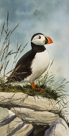 Puffin Painting  - James Williamson