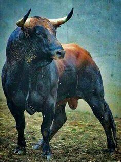 The bull was the first of the creatures he had to fight. ¿Seriously I don't know why someone would just want to kill this beautiful beast for fun? Let's put an end to the bull fighting in Spain and Mexico. I'd rather watch some good ol bull riding. Farm Animals, Animals And Pets, Cute Animals, Animals Planet, Beautiful Creatures, Animals Beautiful, Bull Tattoos, Bull Cow, Bullen
