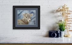 Little Bighorn - Bighorn Sheep Lamb Art Print by Johanna Lerwick. All prints are professionally printed, packaged, and shipped within 3 - 4 business days. Choose from multiple sizes and hundreds of frame and mat options. Sheep And Lamb, Thing 1, All Print, Fine Art America, Prints, Image, Color, Colour, Colors