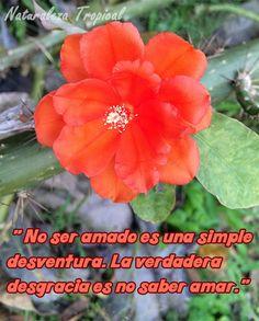 No ser amado es una simple desventura. La verdadera desgracia es no saber amar.