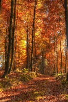 Fall, Forest, Path, Red, Landscape, Nature
