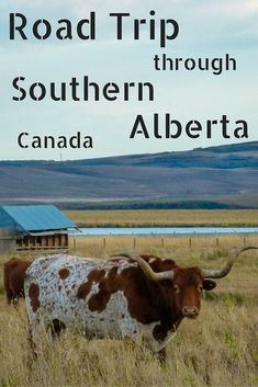Learn about the history of native Blackfoot people and ranch region of southern Alberta. We'll take you on a road trip through southern Alberta.