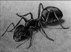 Print Gallery - Ant, 1943, M.C. Escher - WikiArt.org