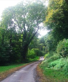 Driveway of Ashley Combe, Ada Lovelace's estate. Visit Devon, Ada Lovelace, Somerset, Writers, Beaches, Texts, Nature Photography, Sunshine, Country Roads
