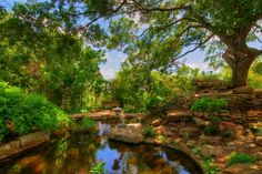 """Zilker Botanical Garden — located on 30 acres in Austin, Texas has often been called """"the jewel in the heart of Austin"""". Theme gardens such as rose, herb and Japanese garden are interconnected with streams, waterfalls and Koi-filled ponds. The Hartman Prehistoric Garden recreates local dinosaur habitat."""