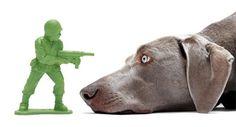 Doca Pet Dog Face Rubber Toy