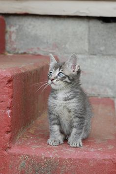 This sweet kitty made me cry. (Read his story on Itty Bitty Kitty Committee to see why.) Jerry Lee Pickett by *lalalaurie, via Flickr