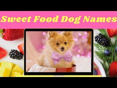 Top 20 Sweet Food Dog Names 2020 ! Cute Puppy Names ! Unique Dog Names - YouTube Cute Puppy Names, Cute Names For Dogs, Best Dog Names, Pet Names, Best Dogs, Cute Puppies, Cute Dogs, Food Dog, Food Names