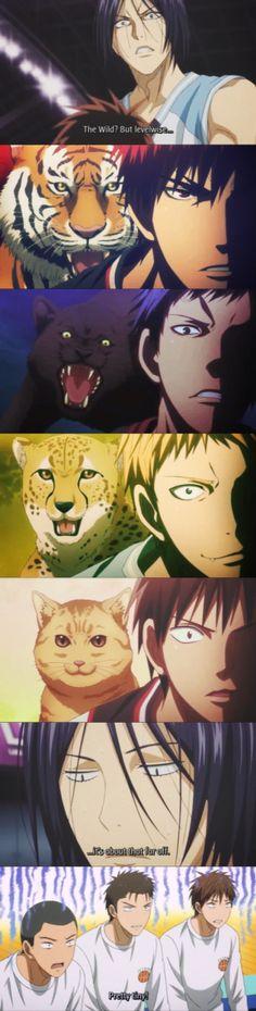 Kagami: Tigre Aomine: Pantera Kotarou: Geopardo Shinji: Gattino È davvero carino