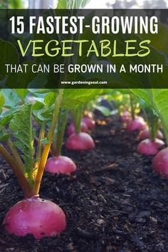 These 15 fast- growing plants are ready to harvest in about a month. plans 15 Fastest-Growing Vegetables That Can be Grown in a Month Fast Growing Vegetables, Fast Growing Plants, Container Gardening Vegetables, Planting Vegetables, Gemüseanbau In Kübeln, Home Vegetable Garden, Veggie Gardens, Organic Gardening Tips, Edible Garden