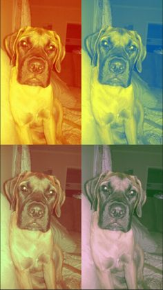Pop art English Mastif puppy