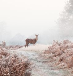 Red Deer #LIFECommunity #Favorites From Pin Board #15
