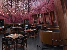 Cherry Blossom season in Japan begins in Jan -Feb and only lasts for a very short time.Here at Kumi Japanese Restaurant + Bar it is Cherry Blossom season all year round in our Main Dining Room! #Kumilasvegas