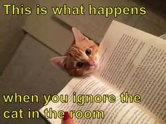 This is what happens http://cheezburger.com/9035007232/cat-meme