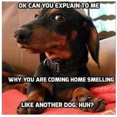 Why you smelling like another dog?