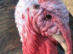 10 Thanksgiving Jokes for Kids