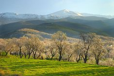 Title  Flowering Almond At The Mountains  Artist  Guido Montanes Castillo  Medium  Photograph