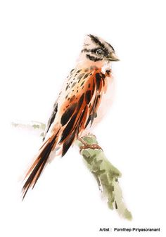 Sparrow Bird Painting , Bird watercolor painting, watercolor, Art print size 8X11 inch for room décor and special gift No.326 by OrientalArt2029 on Etsy