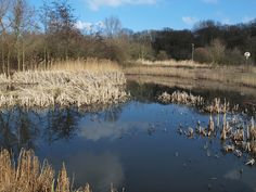 A pond on Upnor road Kent