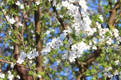Forår | Rejseskribenten