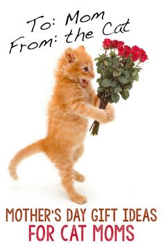 """Those of us that love cats don't consider them """"pets."""" We call them our children, our fur-kids, our babies. And, since cats are members of the family, shouldn't their human mom's get to celebrate Mother's Day? Crazy Cat Lady, Crazy Cats, I Love Cats, Cute Cats, Baby Animals, Cute Animals, Cat Behavior, Cat Quotes, Beautiful Cats"""