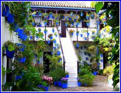 Potted in Spain and now Blue - Patio garden in Córdoba, Andalusia, Spain - Pixdaus