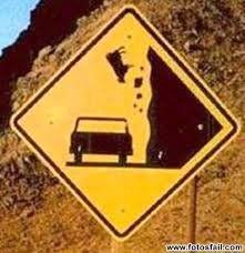 Vaca cae sobre coche