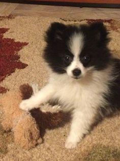 Kelci posing with her favorite toy!