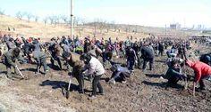 조선에서 식수절에 230여만그루의 나무를 심었다-《조선의 오늘》
