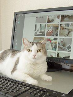 里親さんブログいつも私を見守ってくれる猫 - http://iyaiya.jp/cat/archives/78918